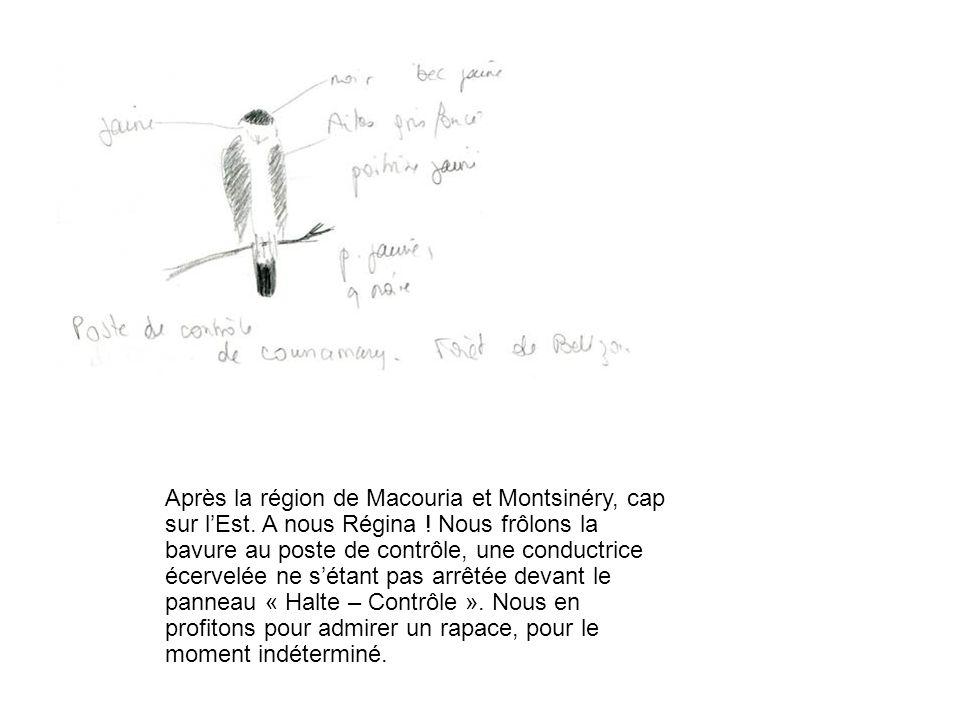 Après la région de Macouria et Montsinéry, cap sur l'Est.