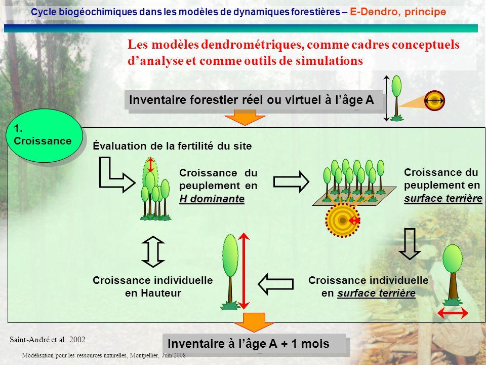 Cycle biogéochimiques dans les modèles de dynamiques forestières – E-Dendro, principe