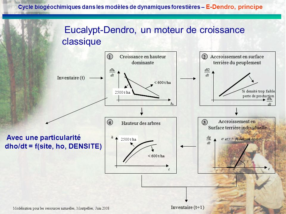 Eucalypt-Dendro, un moteur de croissance classique