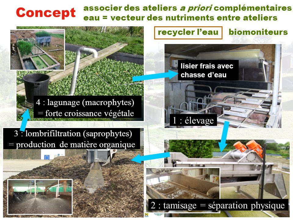 Concept 4 : lagunage (macrophytes) 1 : élevage