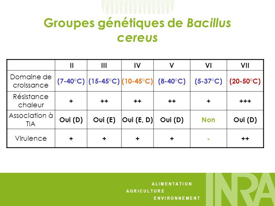 Groupes génétiques de Bacillus cereus