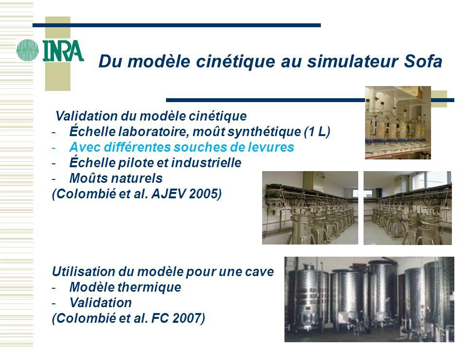 Du modèle cinétique au simulateur Sofa