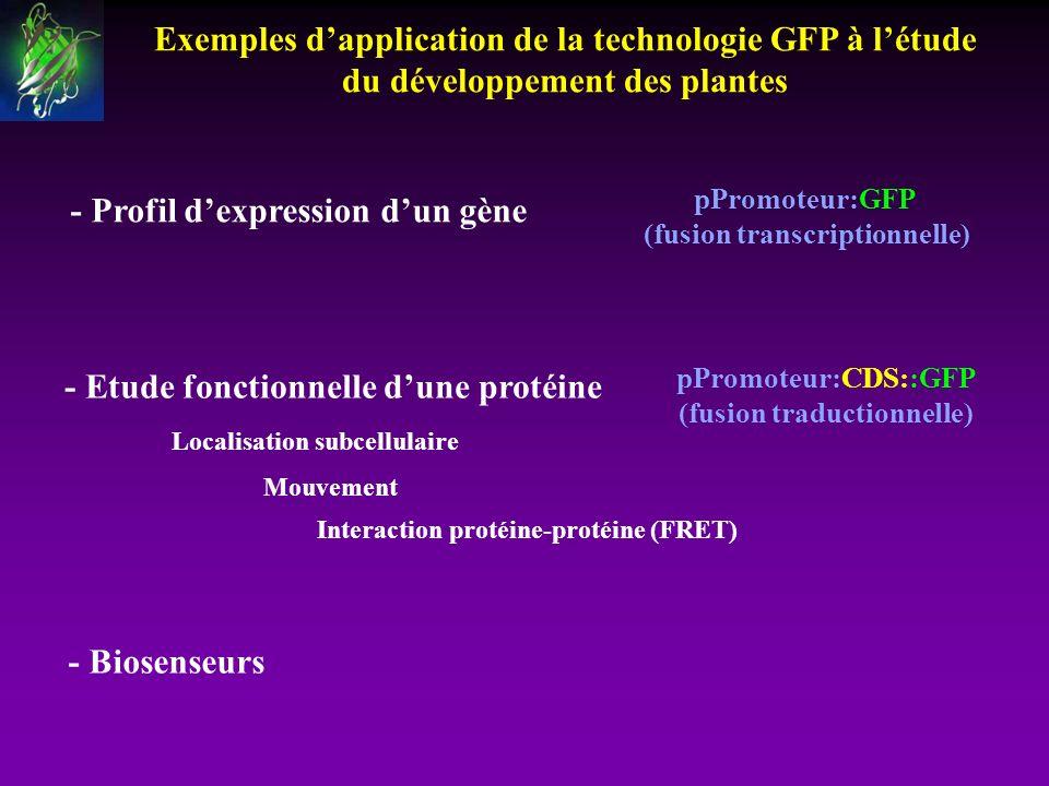 (fusion transcriptionnelle) - Profil d'expression d'un gène