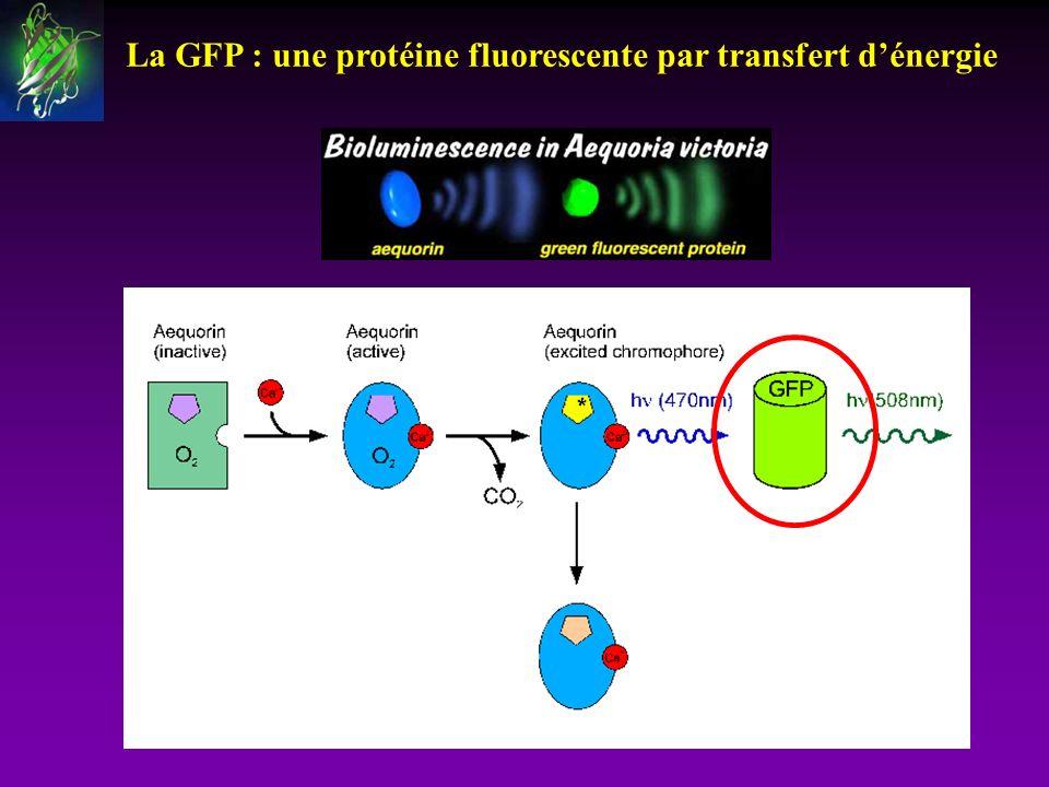 La GFP : une protéine fluorescente par transfert d'énergie