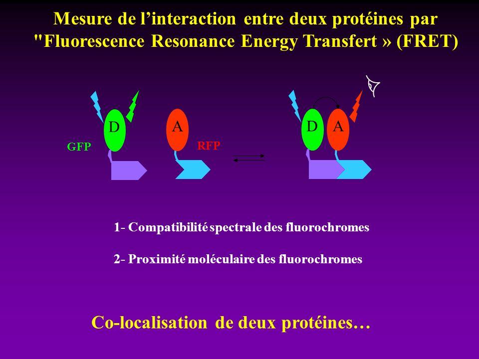 Mesure de l'interaction entre deux protéines par