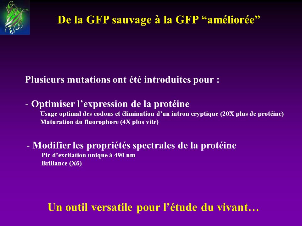 De la GFP sauvage à la GFP améliorée