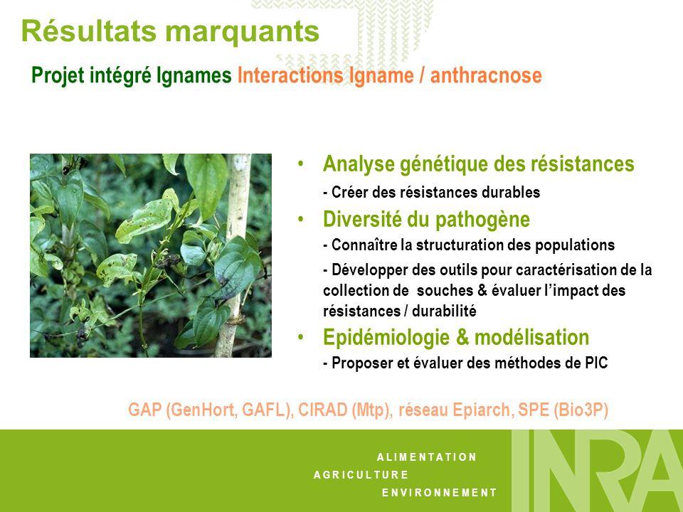 Résultats marquants Projet intégré Ignames Interactions Igname / anthracnose. Analyse génétique des résistances.