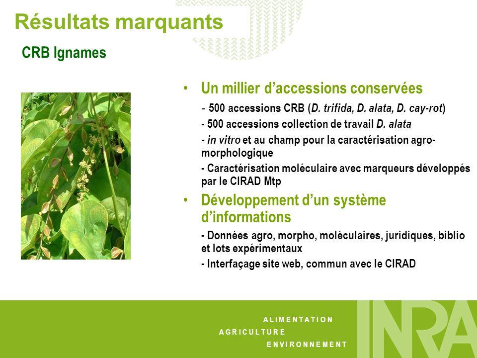 Résultats marquants CRB Ignames Un millier d'accessions conservées