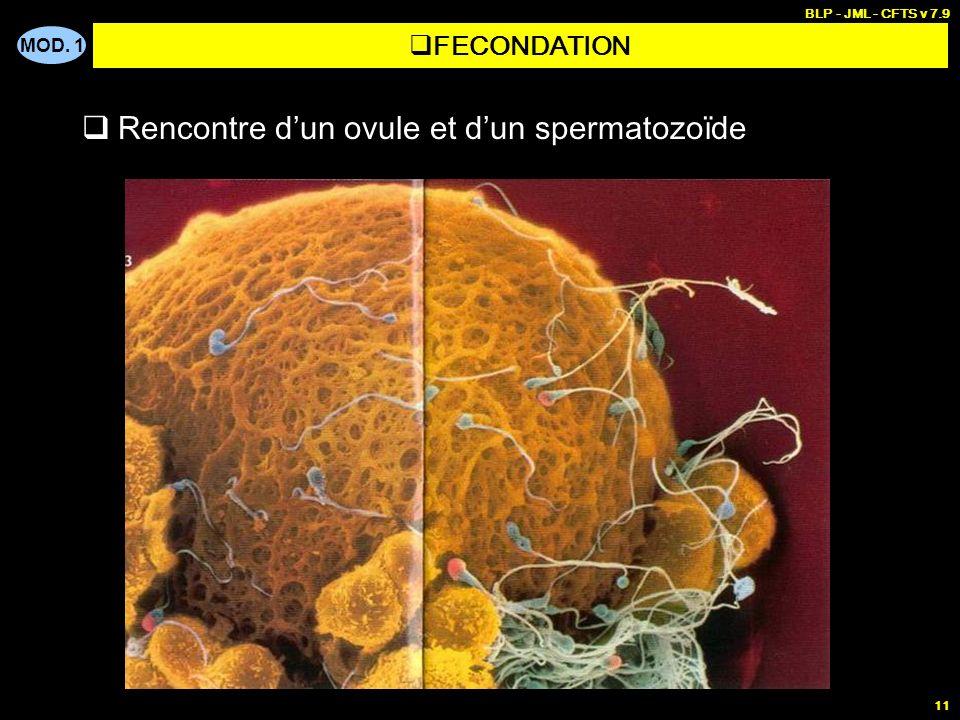 OBSTETRIQUE - Anatomie-physiologie féminine