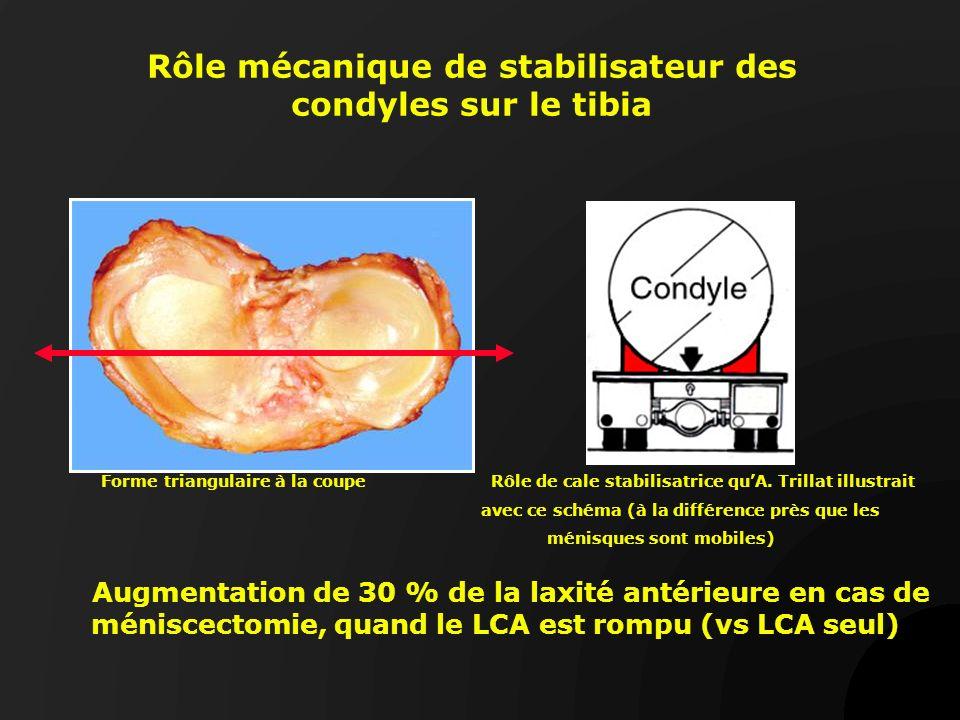 Rôle mécanique de stabilisateur des condyles sur le tibia