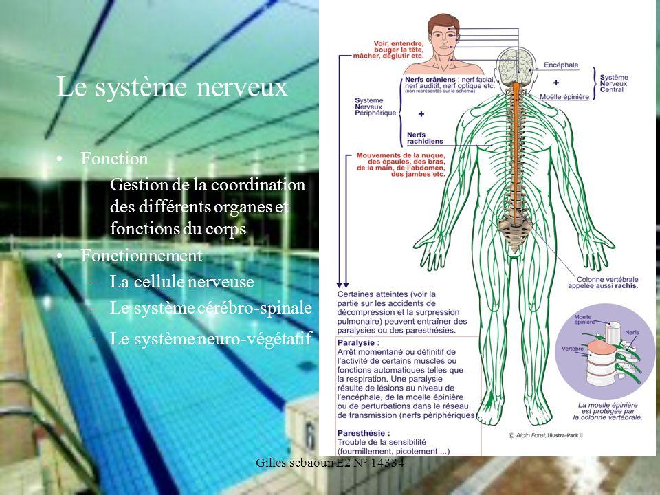 Le système nerveux Fonction