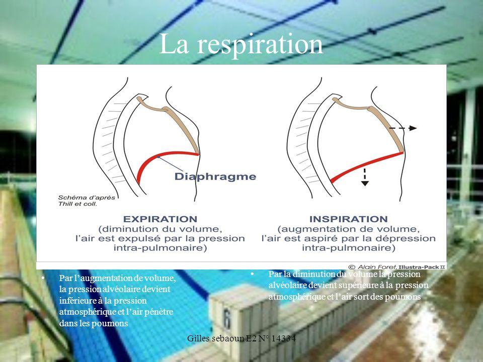 La respirationPar la diminution du volume la pression alvéolaire devient supérieure à la pression atmosphérique et l'air sort des poumons.
