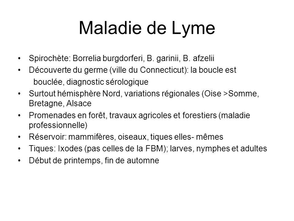 Maladie de Lyme Spirochète: Borrelia burgdorferi, B. garinii, B. afzelii. Découverte du germe (ville du Connecticut): la boucle est.