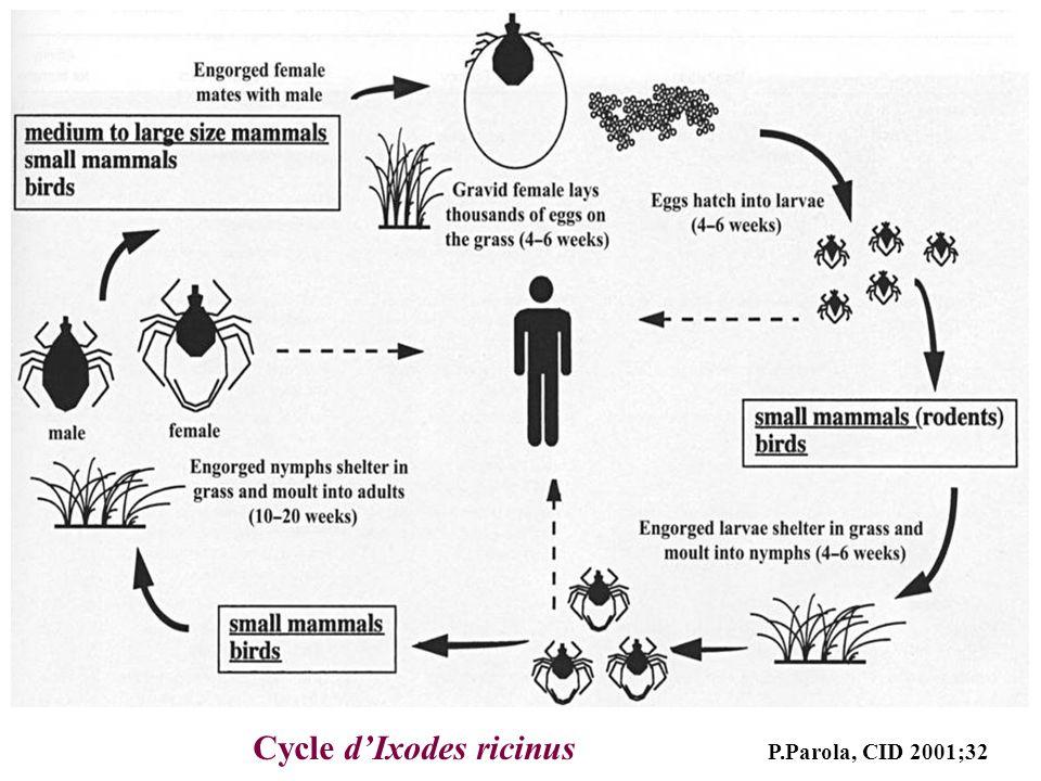 Cycle d'Ixodes ricinus P.Parola, CID 2001;32