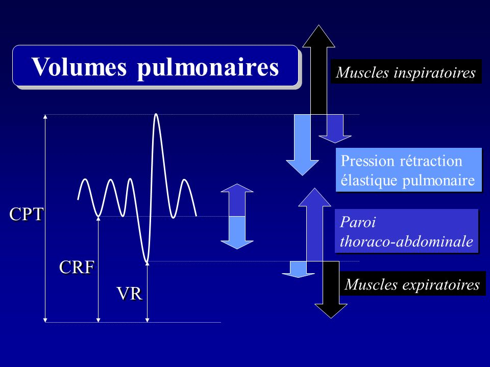 Volumes pulmonaires CPT CRF VR Muscles inspiratoires
