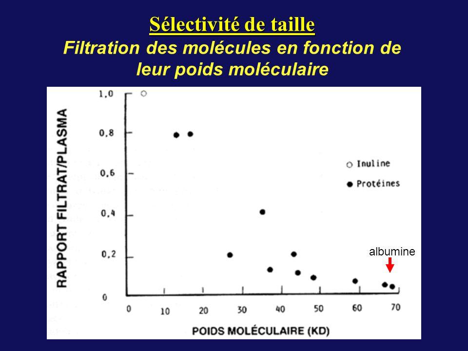 Filtration des molécules en fonction de leur poids moléculaire