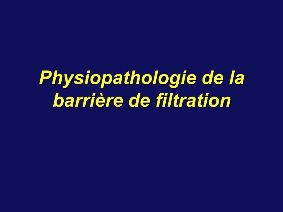 Physiopathologie de la barrière de filtration