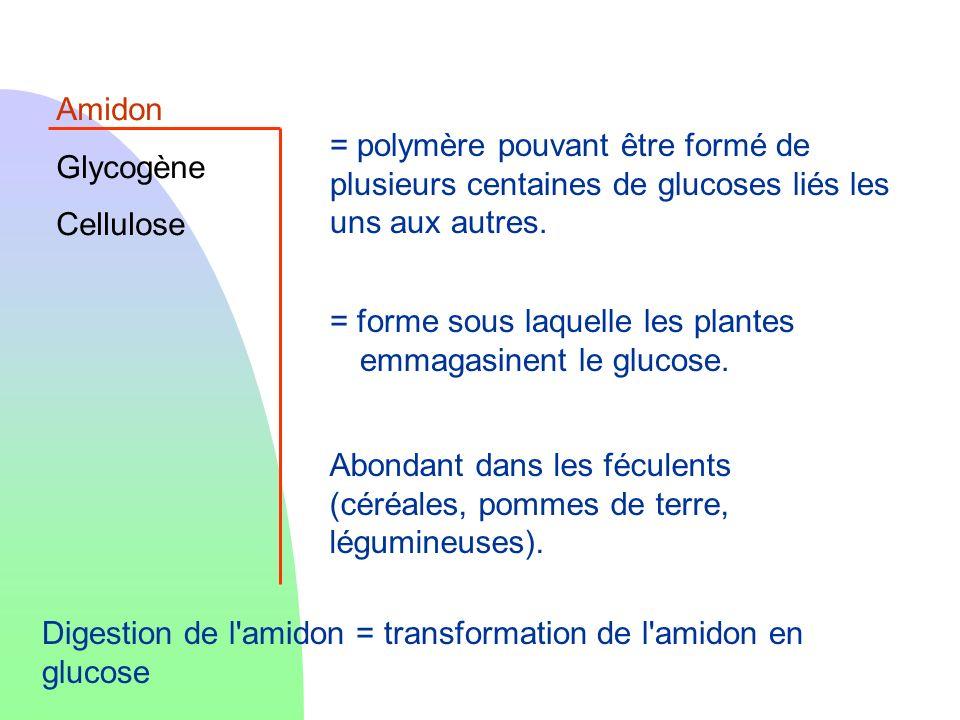 Amidon Glycogène. Cellulose. = polymère pouvant être formé de plusieurs centaines de glucoses liés les uns aux autres.