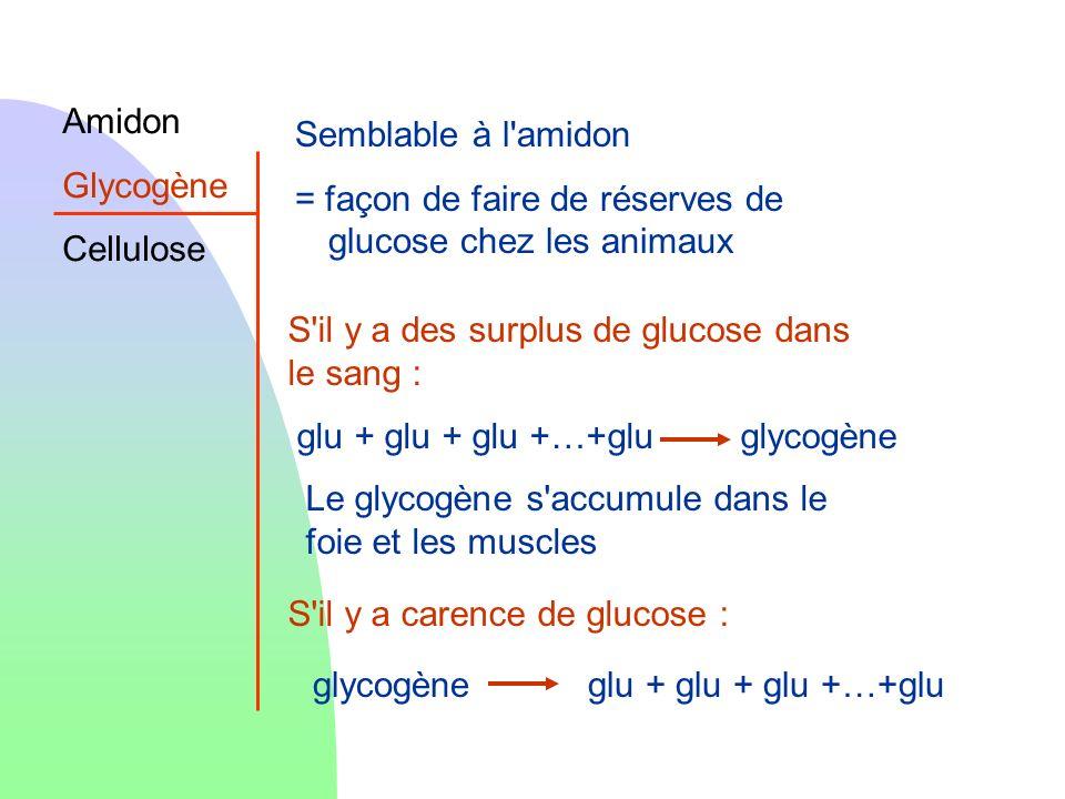 AmidonGlycogène. Cellulose. Semblable à l amidon. = façon de faire de réserves de glucose chez les animaux.