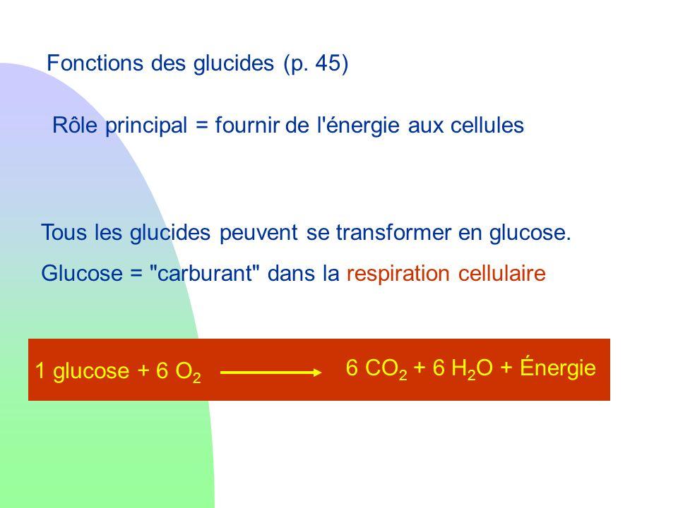 Fonctions des glucides (p. 45)