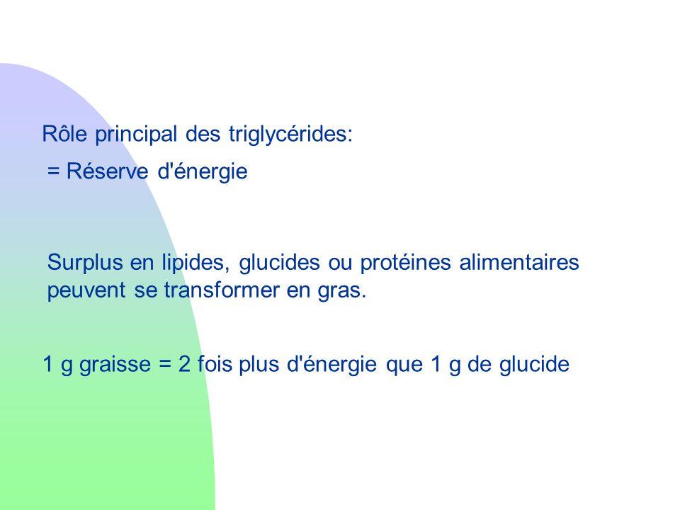 Rôle principal des triglycérides: