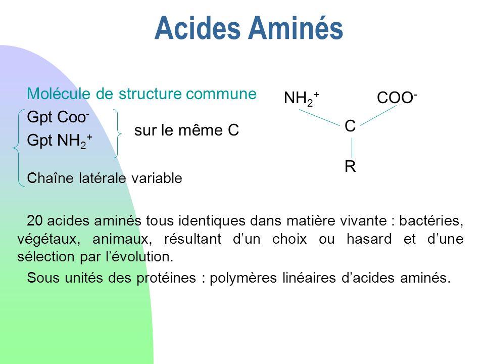 Acides Aminés Molécule de structure commune Gpt Coo- Gpt NH2+ NH2+