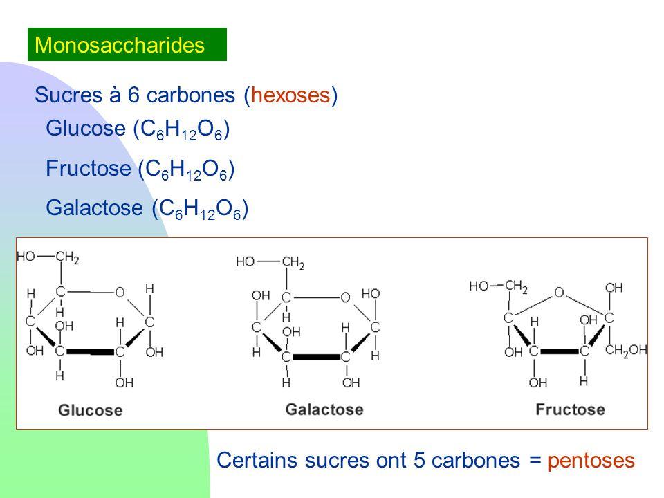 MonosaccharidesSucres à 6 carbones (hexoses) Glucose (C6H12O6) Fructose (C6H12O6) Galactose (C6H12O6)