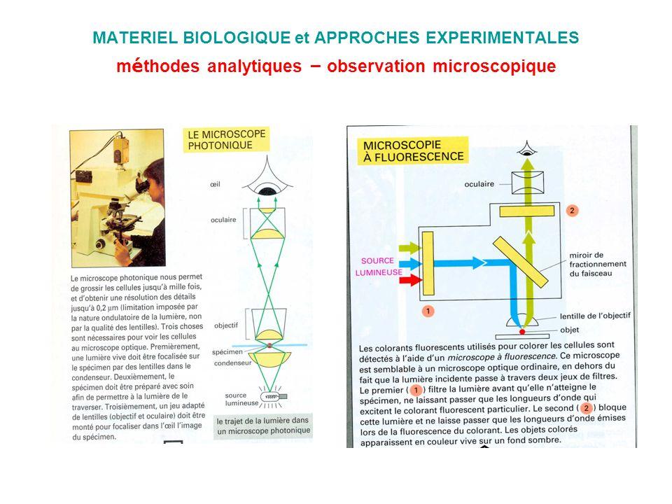 MATERIEL BIOLOGIQUE et APPROCHES EXPERIMENTALES méthodes analytiques – observation microscopique