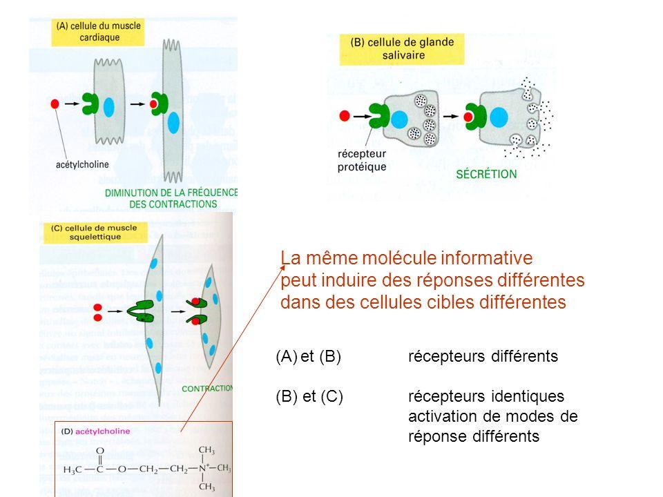 La même molécule informative peut induire des réponses différentes