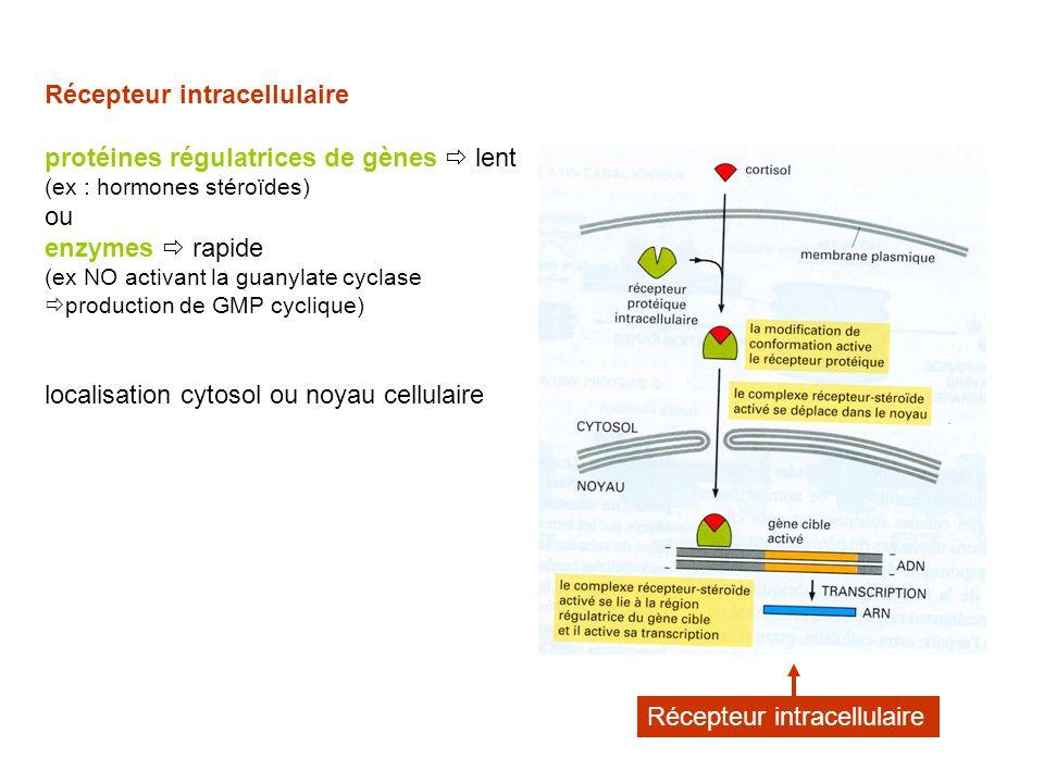Récepteur intracellulaire protéines régulatrices de gènes  lent ou