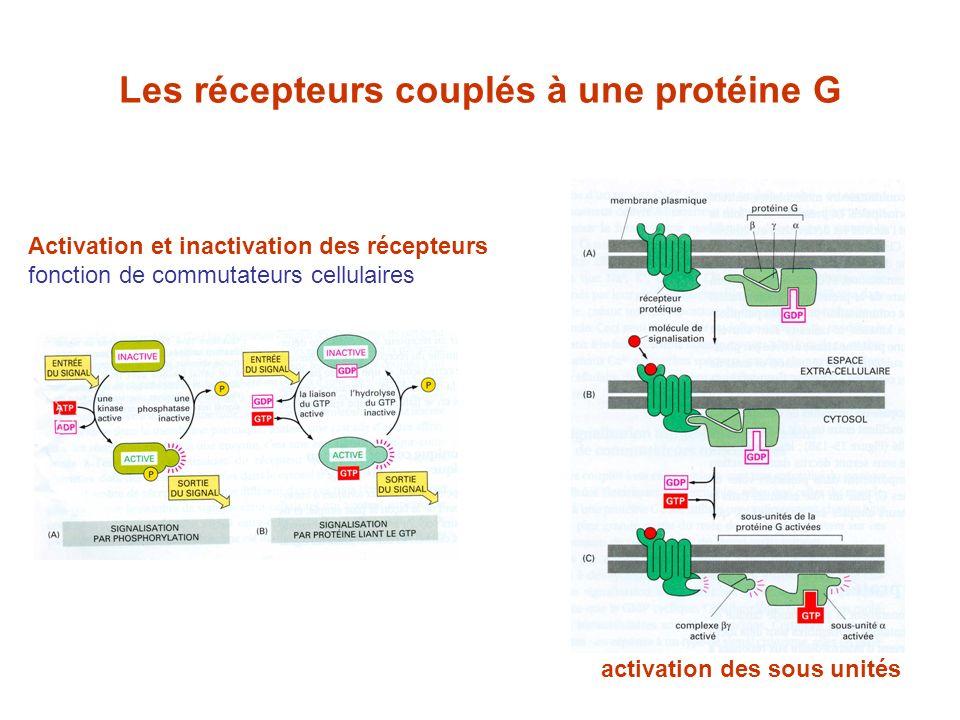 Les récepteurs couplés à une protéine G