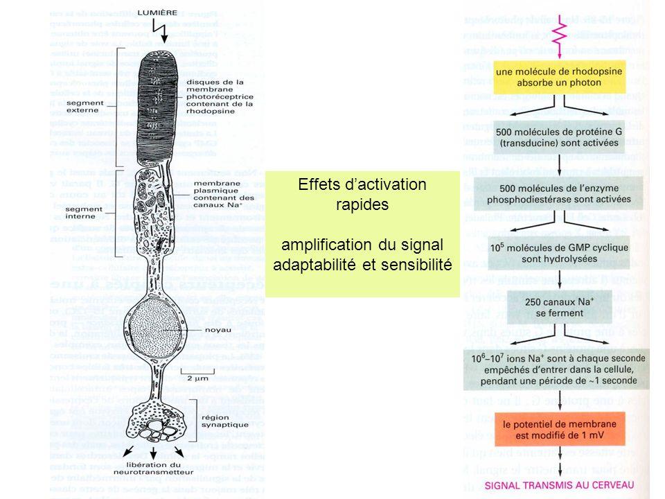 amplification du signal adaptabilité et sensibilité