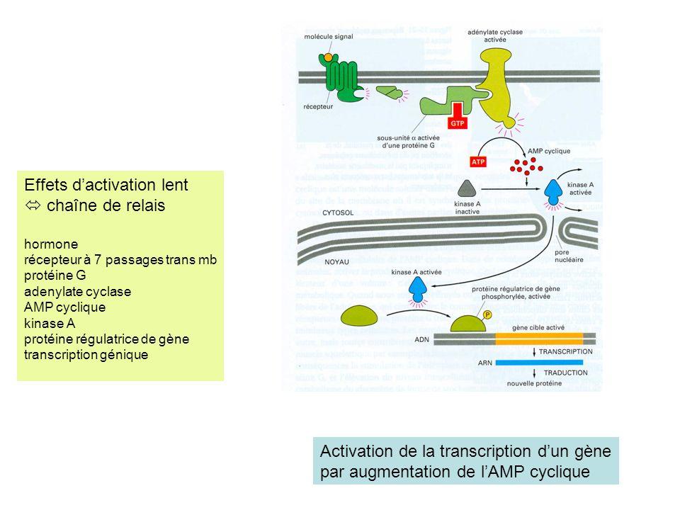 Effets d'activation lent  chaîne de relais