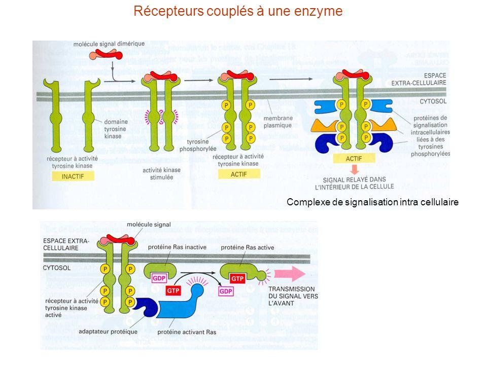 Récepteurs couplés à une enzyme