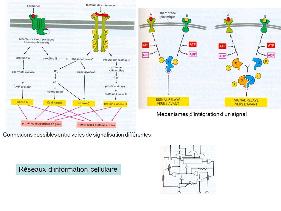 Réseaux d'information cellulaire