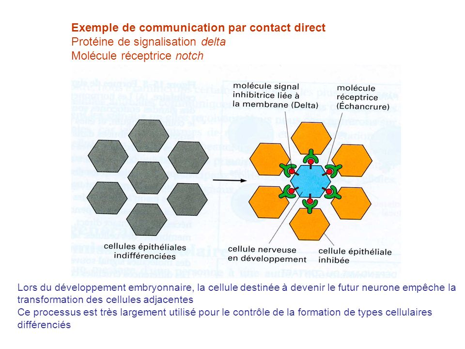 Exemple de communication par contact direct