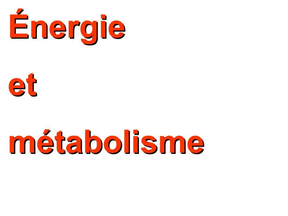 Énergie et métabolisme