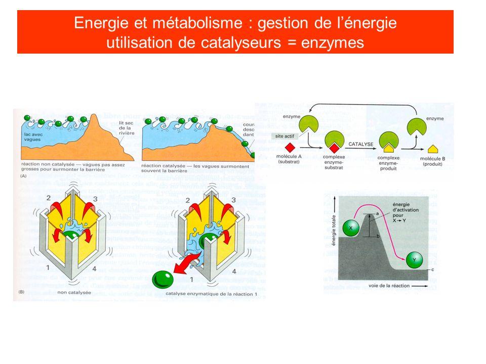 Energie et métabolisme : gestion de l'énergie