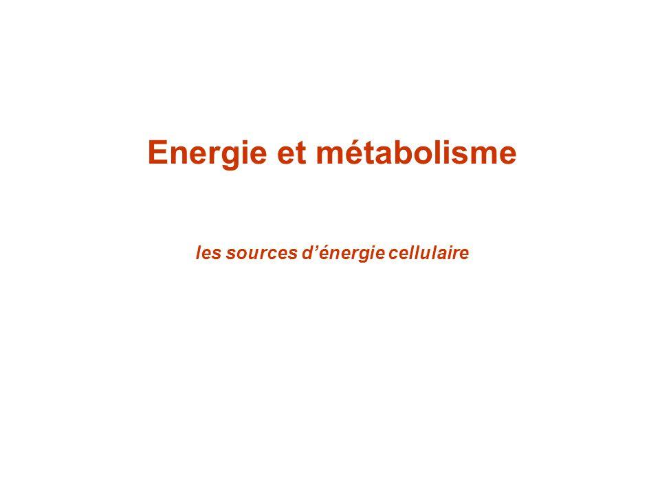Energie et métabolisme les sources d'énergie cellulaire
