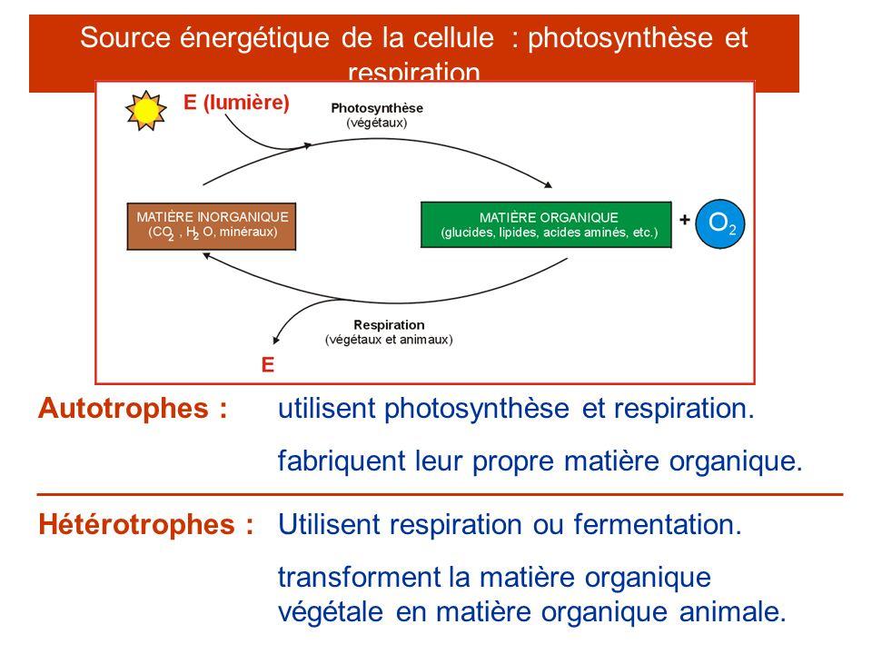 Source énergétique de la cellule : photosynthèse et respiration