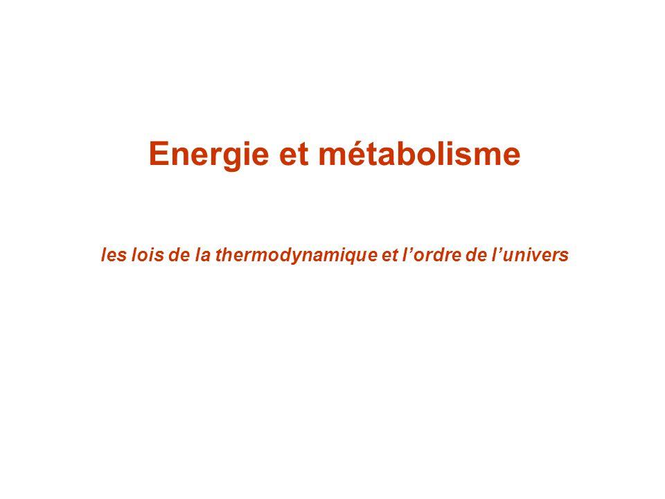 Energie et métabolisme