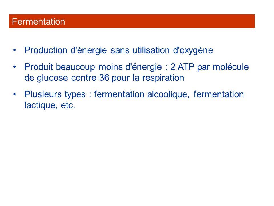 FermentationProduction d énergie sans utilisation d oxygène.