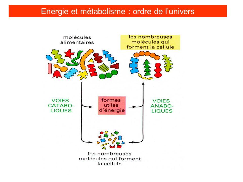 Energie et métabolisme : ordre de l'univers