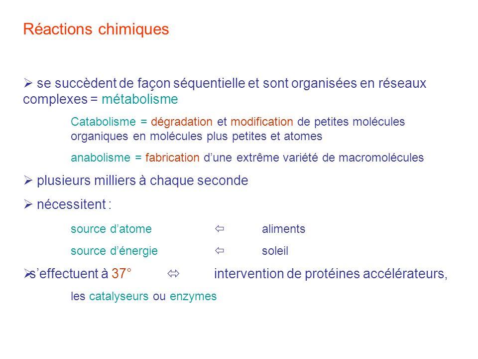 Réactions chimiques  se succèdent de façon séquentielle et sont organisées en réseaux complexes = métabolisme.