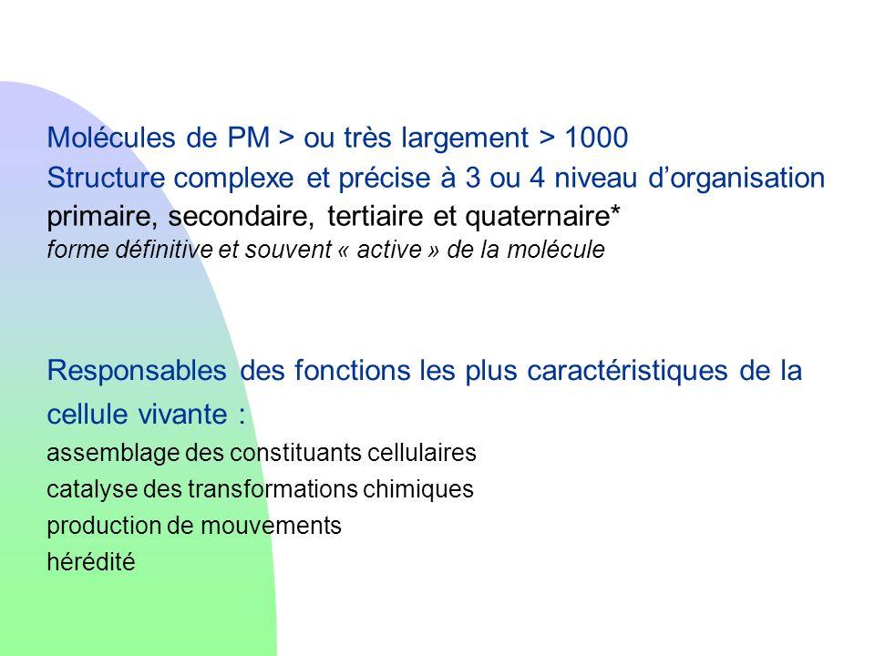 Molécules de PM > ou très largement > 1000