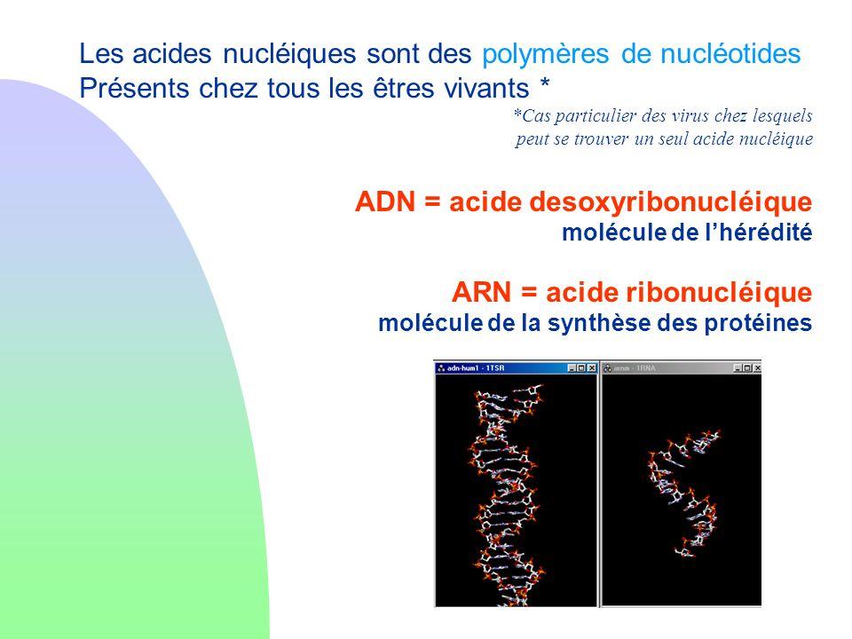 Les acides nucléiques sont des polymères de nucléotides
