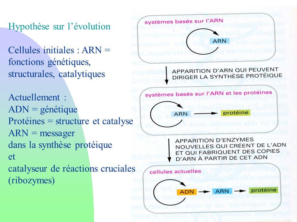 Hypothèse sur l'évolution