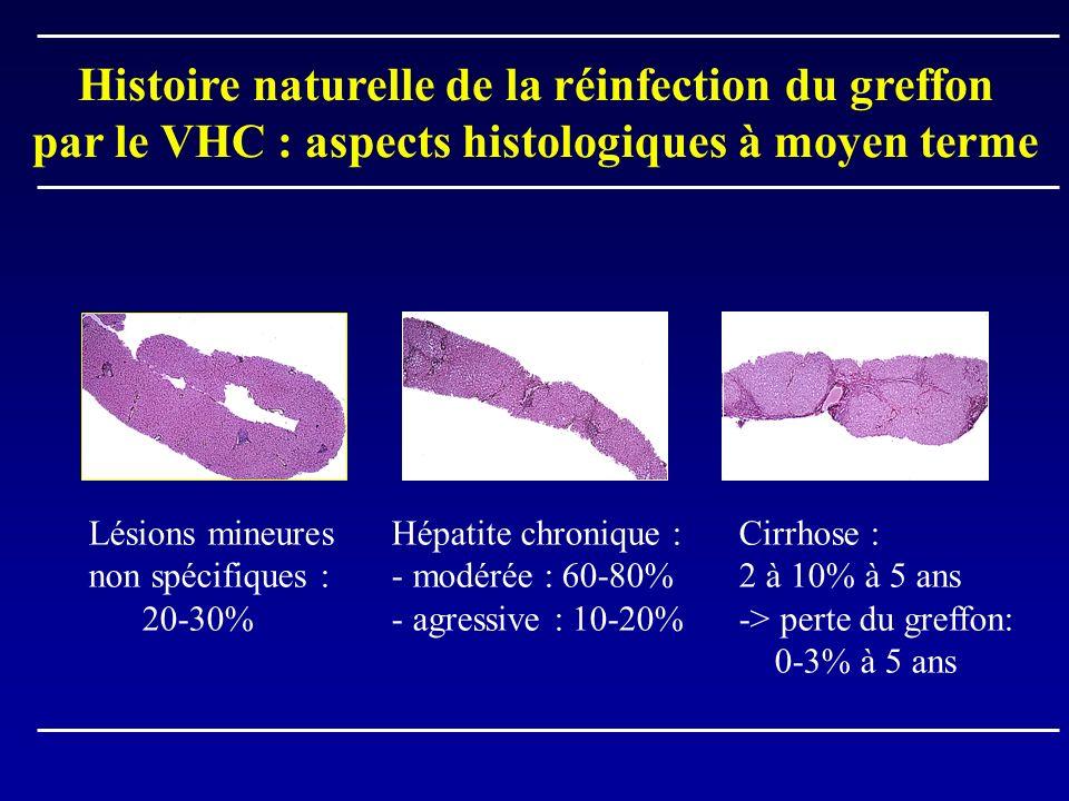 Histoire naturelle de la réinfection du greffon