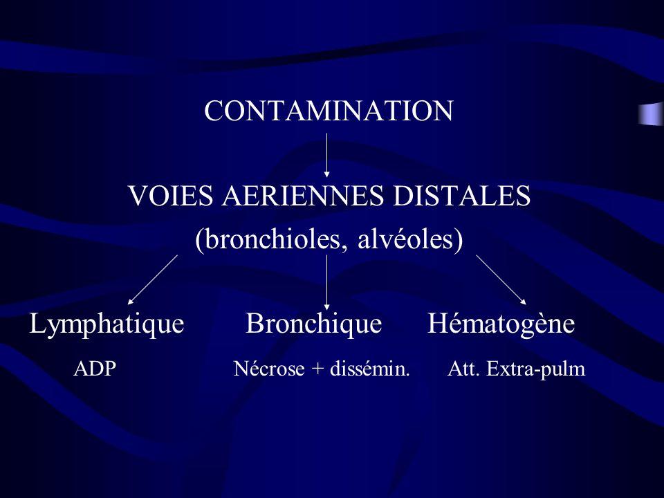 VOIES AERIENNES DISTALES (bronchioles, alvéoles)