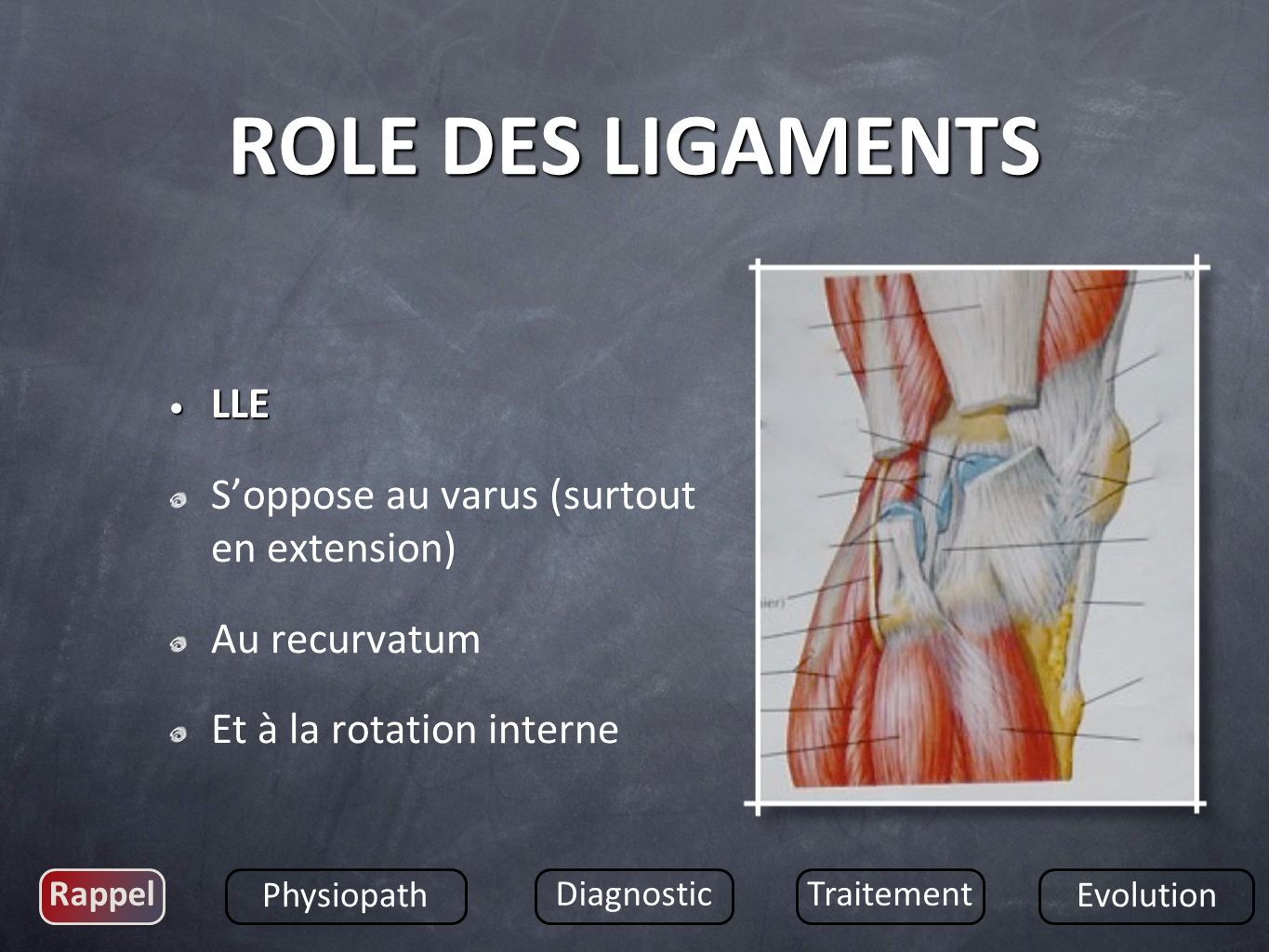 ROLE DES LIGAMENTS LLE S'oppose au varus (surtout en extension)